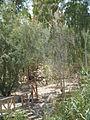 Atar Hatvila - Qaser Al Yahud P1020114.JPG