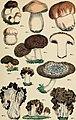 Atlante botanico; secondo il sistema naturale di De Candolle; 85 tavole miniate con testo esplicativo ridotto a dizione italiana da Giovanni Briosi (1886) (19721029104).jpg