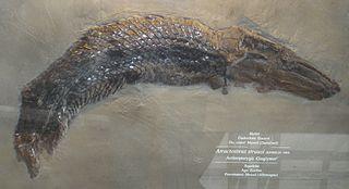 <i>Atractosteus</i> Genus of fishes