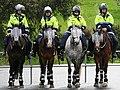 Australian Mounted Police Victoria-edit1.jpg