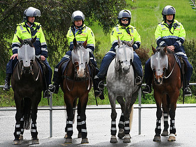 Police mounted on horses