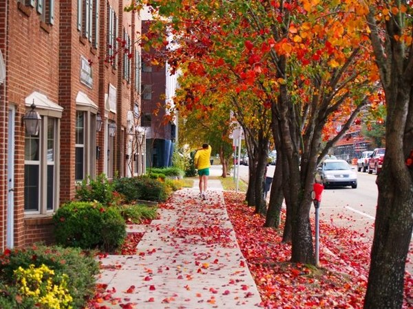 Tallahassee experiences four seasons. Shown are the autumn leaves along the sidewalks of Monroe Street in Downtown Tallahassee. AutumnColors.JPG