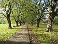 Autumn Avenue - Jesus Green - geograph.org.uk - 1029629.jpg