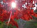 Autumn in the Hirosaki Park - panoramio.jpg