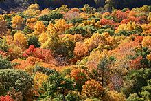 Fall weblio voltagebd Images