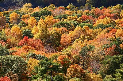 Autumn leaves, Talcott Mountain State Park.jpg