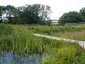 Avenue Washlands Nature Reserve - Dragonfly Pond - geograph.org.uk - 482380.jpg