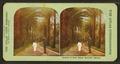 Avenue of date palms, Honolulu, Hawaii, by Atlas View Co..png