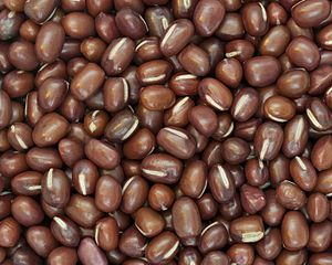 English: Picture of Azuki Beans. The ones show...