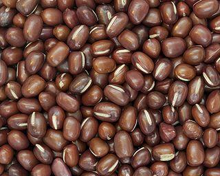 species of plant, azuki bean