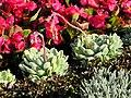 Bürkliplatz - Blumenuhr 2012-06-02 18-48-01 (P7000).JPG
