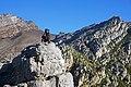 Baboon @ Steenbras River Gorge 1.jpg