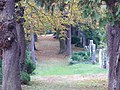Baden jüdischer Friedhof 3.jpg