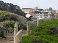 Baker Beach path with shrubs and crow.jpg