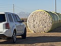Bales of cotton (30183535290).jpg