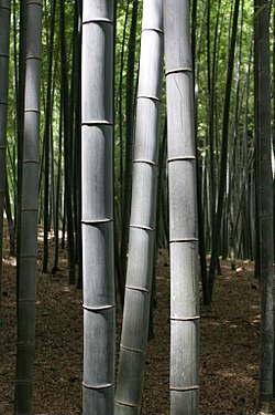 250px-bambookyoto