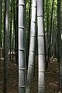 BambooKyoto.jpg