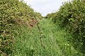 Bampton, old track between fields - geograph.org.uk - 169621.jpg