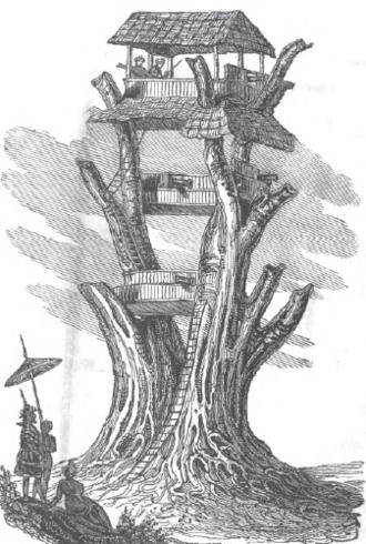 Maha Bandula - Maha Bandula inspects a lookout tree at Danubyu.