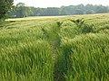 Barley, Basildon - geograph.org.uk - 814156.jpg