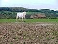 Barn and Paddock, Poplar Farm - geograph.org.uk - 159731.jpg