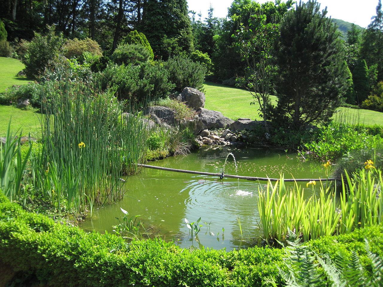 Fichier bassin de jardin wikip dia for Jardin wikipedia