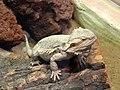 Bdg zoo terrarium 17 01-2015.jpg