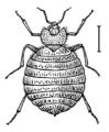 Bedbug (PSP).png