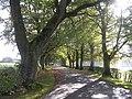 Beech-lined Drive to Rowallan Castle - geograph.org.uk - 264799.jpg