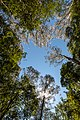Beech Forest (AU), Great Otway National Park -- 2019 -- 1318.jpg
