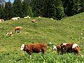Berchtesgaden IMG 4997.JPG