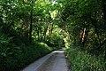 Bicton Manor Wood - geograph.org.uk - 465197.jpg
