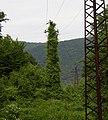 Bioelectricity in Hungary.jpg