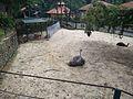 Bird Park in Kuala Lumpur (Malaysia) (13).jpg