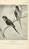 Bird notes (1902) (14563251999).jpg