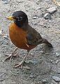Birds in Central Park 3.jpg