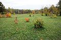 Biryulyovskiy Arboretum 01.jpg