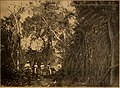 Blätter für Aquarien- und Terrarien-Kunde (1902) (20377878072).jpg