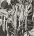 Bolgiano's spring 1968 (1968) (20204544459).jpg