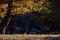 Bolu autumn 0012.jpg