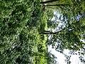 Bornem Barelstraat Omgracht hakhoutperceel (4) - 230202 - onroerenderfgoed.jpg