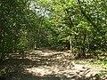 Bosco di castagni presso Ca' Maggiore - panoramio.jpg