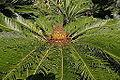 Botanical Garden 09.jpg