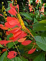 Botanical Garden of Peradeniya 28.JPG