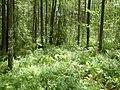 Braslaw District, Belarus - panoramio - alinco fan (3).jpg