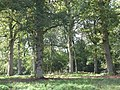 Briary Wood - geograph.org.uk - 257559.jpg