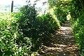 Bridleway behind Farringford - geograph.org.uk - 1379326.jpg