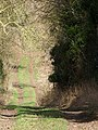 Bridleway near Chettle - geograph.org.uk - 1181834.jpg