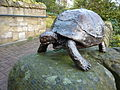 Bronze turtoise (6532983337).jpg