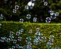 Bubble machine soap bubbles at Staplefield, West Sussex, England 02.jpg